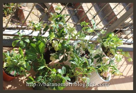庭づくり 橋の下 クリロ