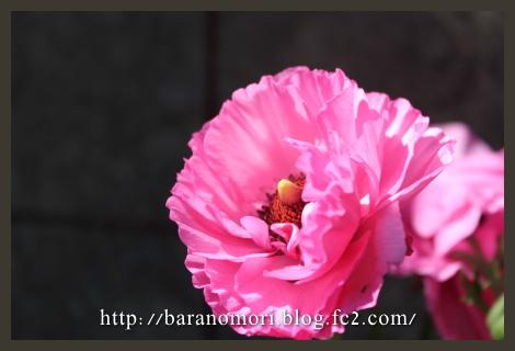 庭の花 擁壁下 花壇