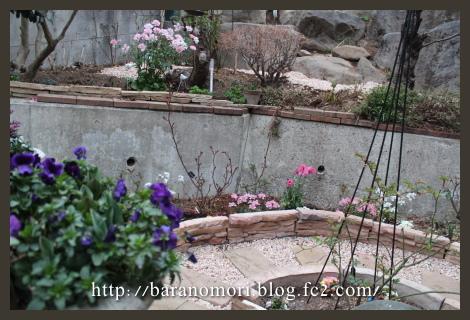 庭の花 20130327