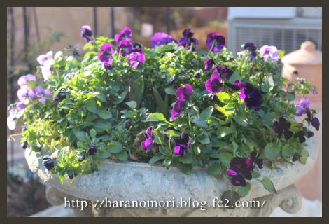 大鉢 庭の花