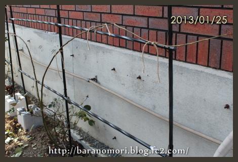 ブランピエールドロンサール 20130125