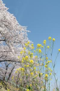 春こらぼ_800