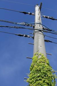 電柱見上げる_800