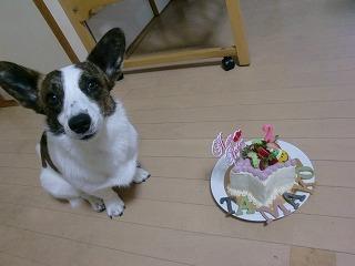 早く食べたいでし!byたまこ
