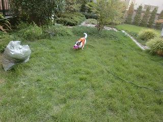 芝生がフカフカでし~。byたまこ