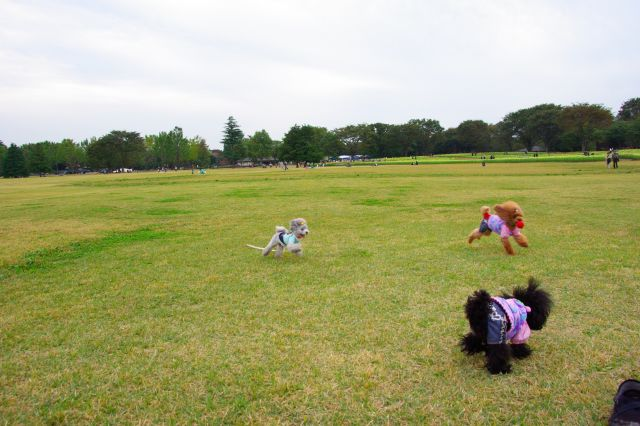 10.22昭和記念公園 1000