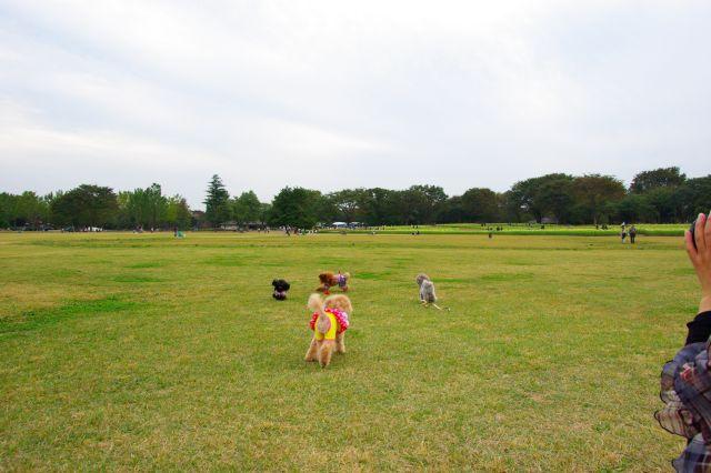 10.22昭和記念公園 996