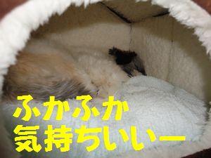 DSC01189-2.jpg