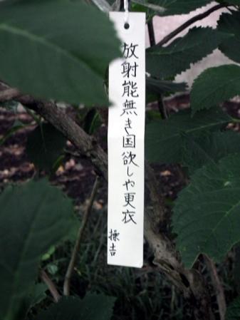 川崎 妙楽寺に咲く紫陽花(6)