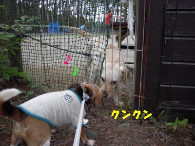 ai-1008-doggypark03.jpg