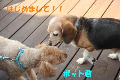 ai-1106-dogcafeU01.jpg