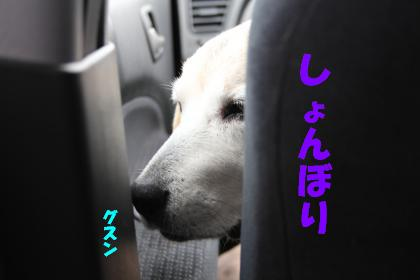 bell-0408-kuruma01.jpg