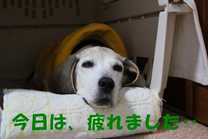 bell-0412-oheya01.jpg