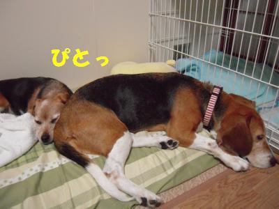 freeai-0819-oheya01.jpg