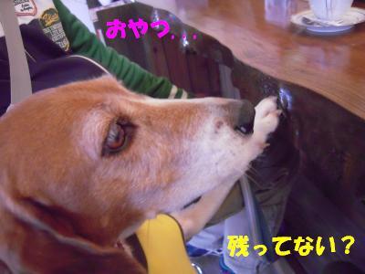 freeda-1106-dogcafeU02.jpg