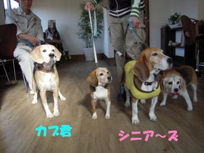 kabu-1106-dogcafeU01.jpg