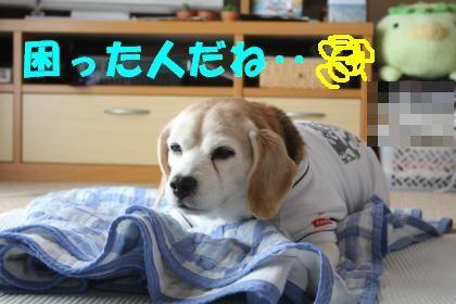 rookie-0413-sanpo03.jpg