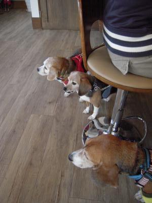 seniores-1106-dogcafeU01-c.jpg
