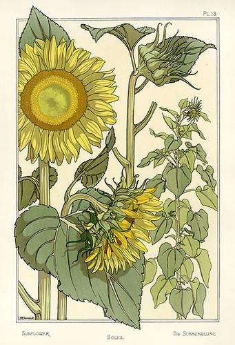 eugene,grasset,sunflower-db24f1c78f060e8bdf84b65c6011d7c3_h