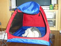 リビングルームにテントを張ったら入って寝た