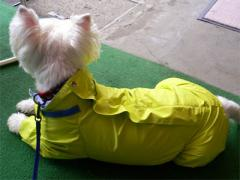 raincoatback43.jpg