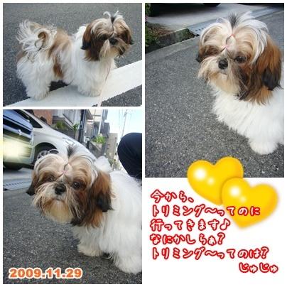 091129_jyujyu_cut_00.jpg