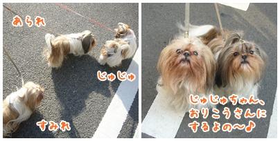 091129_jyujyu_cut_02.jpg
