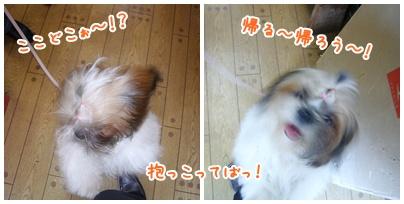 091129_jyujyu_cut_03.jpg