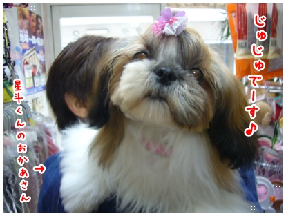 091129_jyujyu_cut_04.jpg