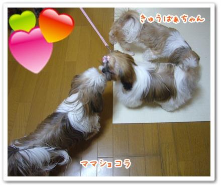 091129_jyujyu_cut_06.jpg