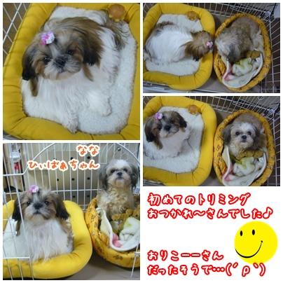 091129_jyujyu_cut_08.jpg
