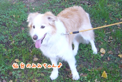 091227_oizumi_mi_02.jpg