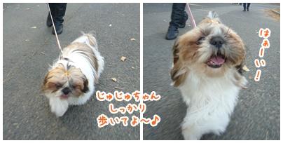 091227_oizumi_mi_03.jpg