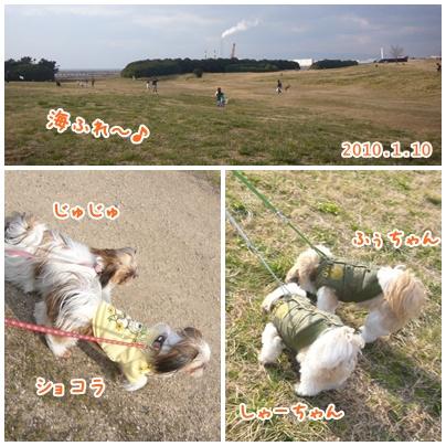 100110_dogrun_01.jpg
