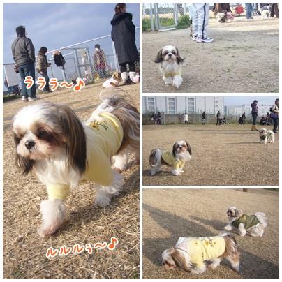100110_dogrun_03.jpg