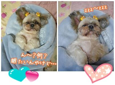 100208_tata_02.jpg