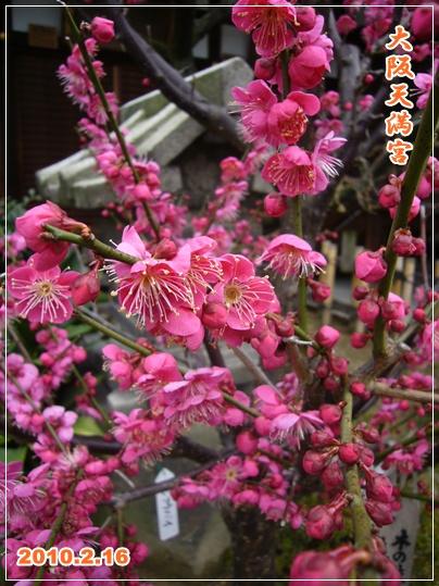 100219_ume_taku_02.jpg