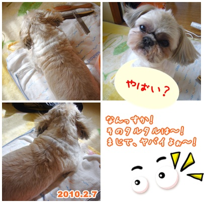100219_ume_taku_07.jpg