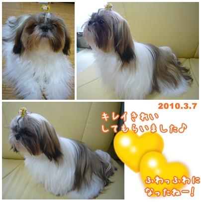 100307_ju_04.jpg