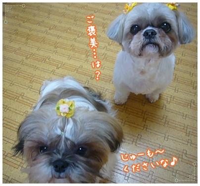 100307_ju_06.jpg