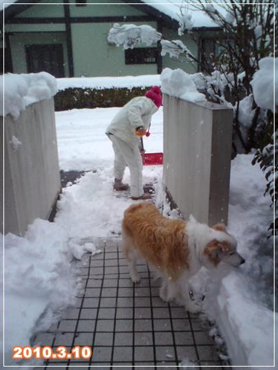 100310_sendai_mimi_01.jpg