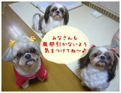 100310_sendai_mimi_03.jpg