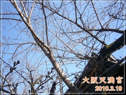 100319_tenjinsan_01.jpg