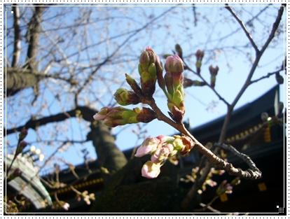 100319_tenjinsan_03.jpg