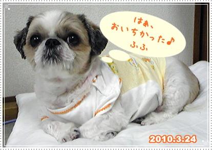 100325_purin_cookie_00.jpg