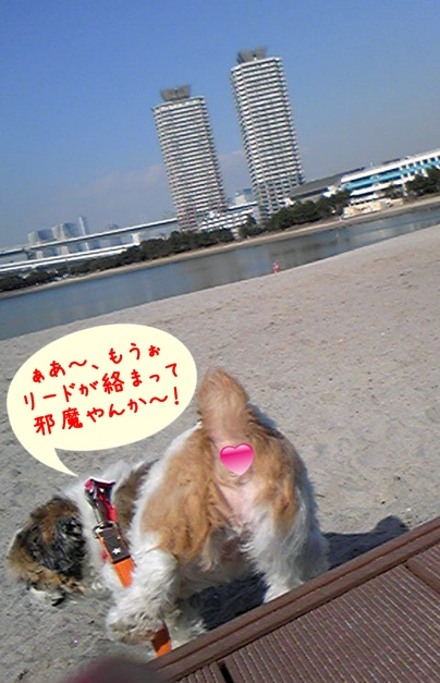 100325_purin_cookie_02.jpg