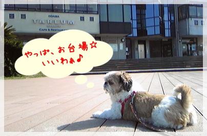 100325_purin_cookie_03.jpg