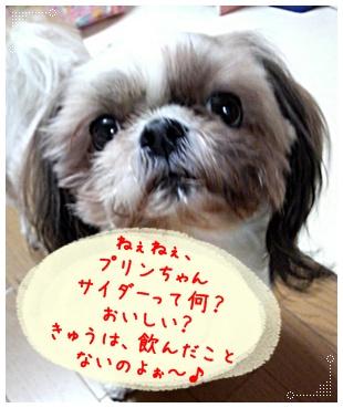 100325_purin_cookie_06.jpg