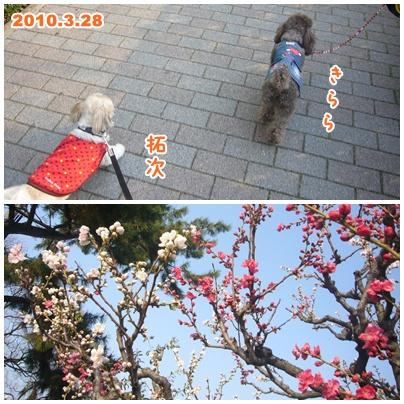 100328_29_sakura_01.jpg