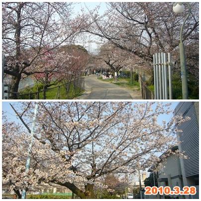 100328_29_sakura_02.jpg